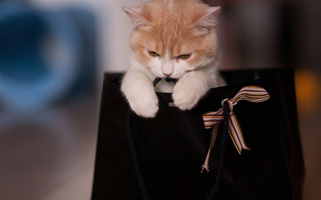 kedi hediye etmek
